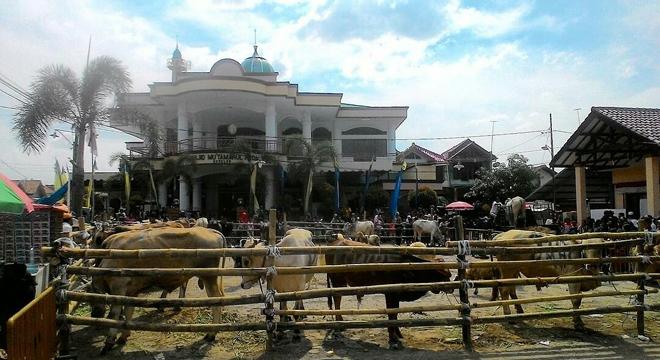 Jumlah Hewan Qurban di Desa Bodelor Capai 27 Ekor Sapi dan 84 Ekor Kambing