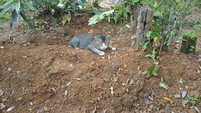 Sedih Majikan Wafat, Kucing ini Viral di Dunia