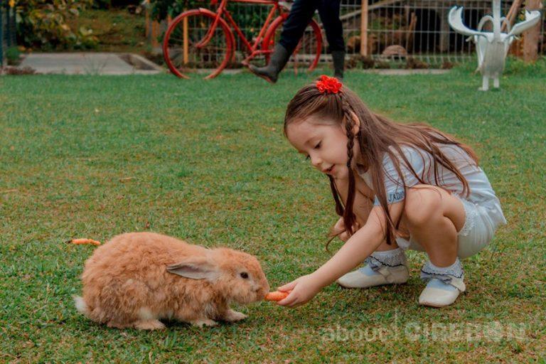 Serunya Bermain dan Berinteraksi dengan Hewan di Mini Zoo Aston Cirebon Hotel