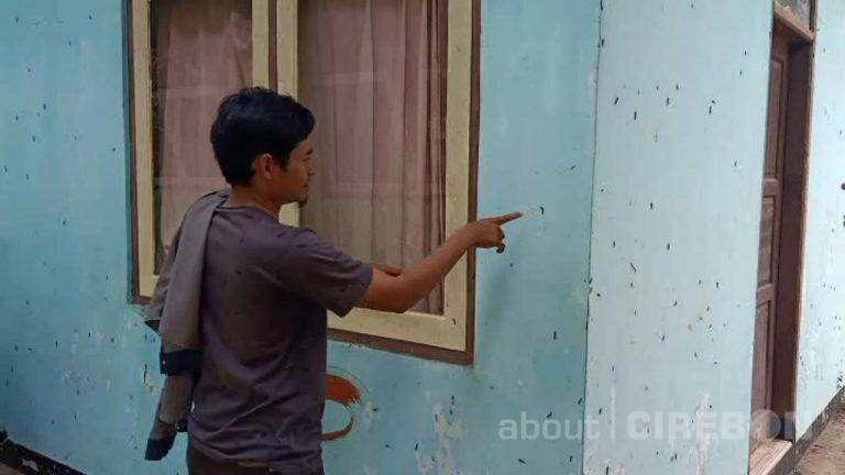 Ribuan Ulat Bulu Serang Sekolah di Kabupaten Cirebon, Menempel di Dinding Hingga Atap Kelas