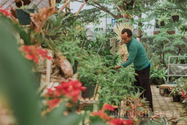 Dukung Pelestarian Lingkungan, Lebih Dari 2.000 Tanaman Hias Ditanam di Plant Nursery Area Aston Cirebon