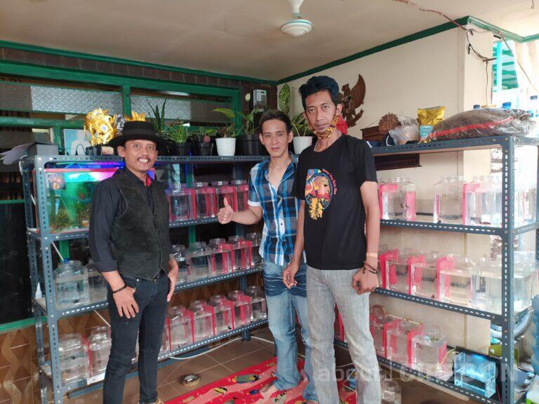 Warga Cirebon Budidaya Ikan Cupang Hingga Dijual ke Luar Negeri