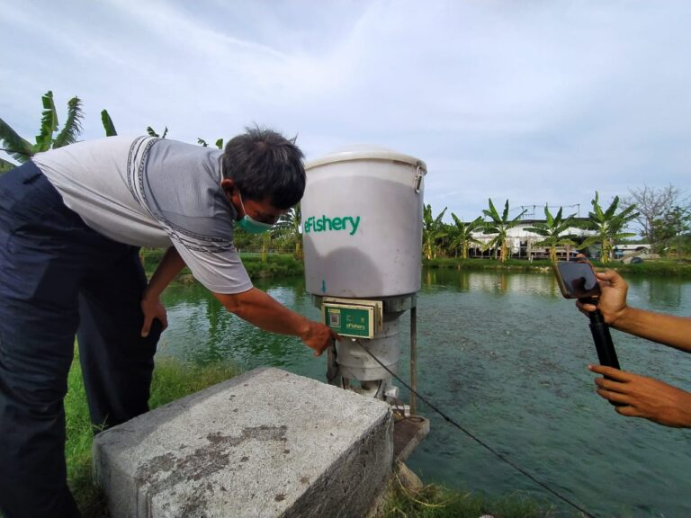 Gunakan Teknologi eFishery, Petani Ikan di Cirebon Diuntungkan
