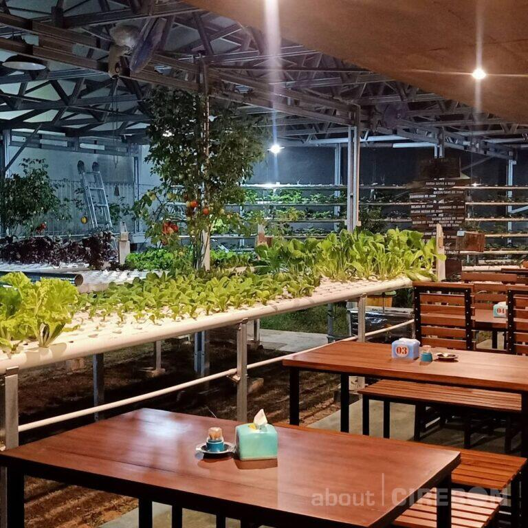 Green House Kuningan Usung Tema Cafe Hidroponik 