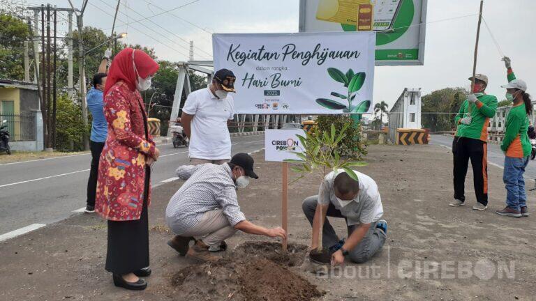 Ratusan Pohon Tabebuya Hiasi Jalur Pantura Cirebon