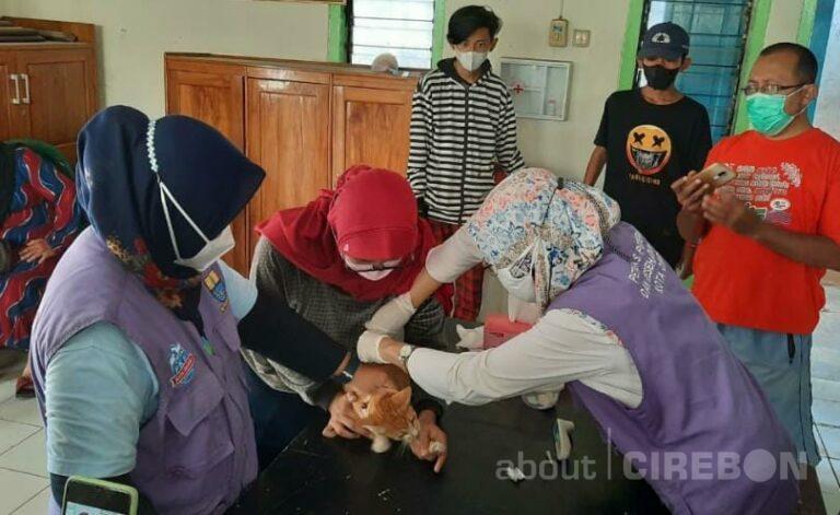 Puluhan Hewan Peliharaan di Kota Cirebon Terima Vaksinasi Rabies