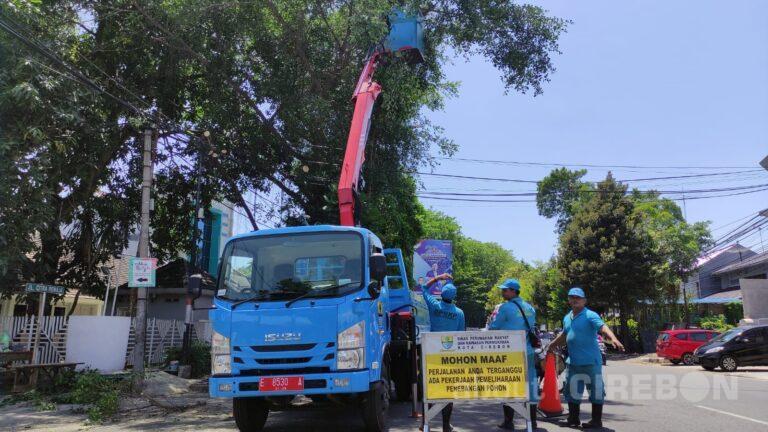 Antisipasi Pohon Tumbang Jelang Musim Penghujan, Pohon di Kota Cirebon Dilakukan Pemangkasan
