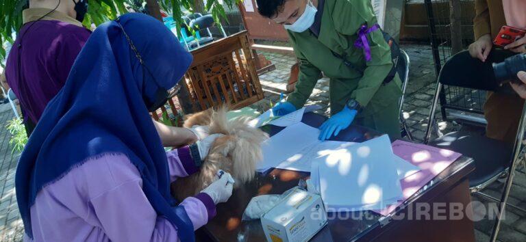 Cegah Penyebaran Rabies Hewan Peliharaan, Pemda Kabupaten Cirebon Gelar Penyuntikan Massal