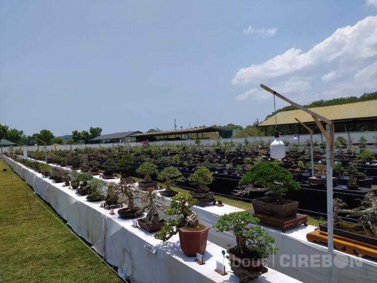 750 Tanaman Bonsai Nasional Dipamerkan di Cirebon